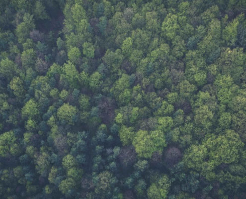 Green forest filmed from above.